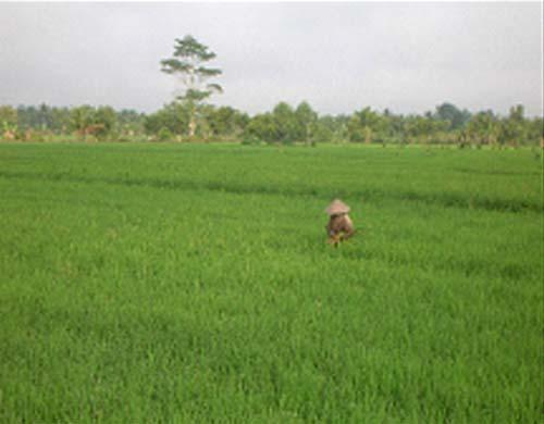 pertanian-ps-1
