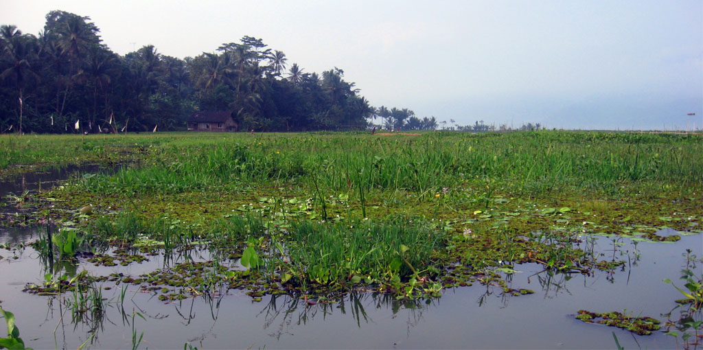 Sistim informasi sumberdaya air dan lahan rawa di Sumatera Selatan  khususnya dan Indonesia pada umumnya akan membantu penyedia informasi ee51116d15